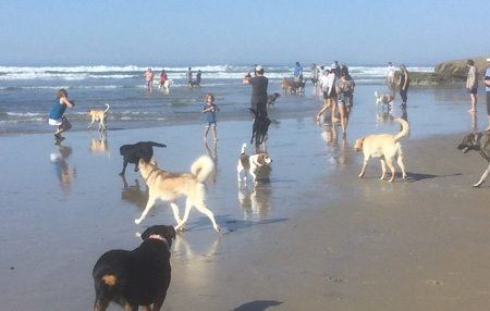 our team at Dog Beach