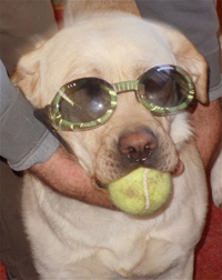 Relle, dressed up with sunglasses and her tennis ball