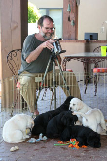 Steve, shooting his weekly video of the pups, who are gathered at his feet.  There are three black lab puppies and two chubby yellow lab puppies trying to hog the video screen