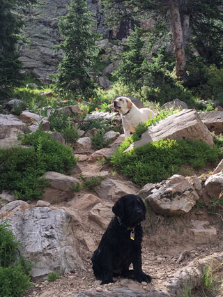 A yellow lab and black lab puppy -- rocking the forest lakes!