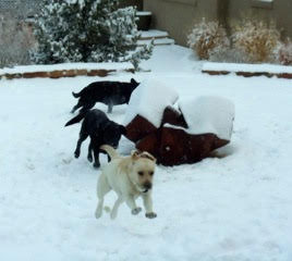 Lark enjoing the snow with her friends
