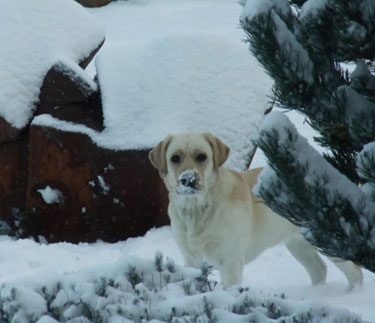 Relle, with snow on her nose