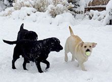 Relle plays with her friends in the snow